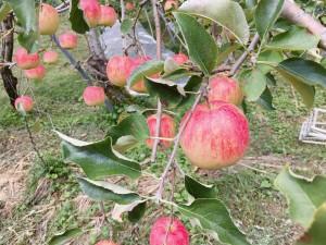 桃&りんご園